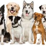 Q&A: What does a dog height stand for?
