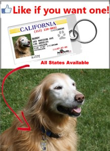 Golden Retriever Pet ID Tag
