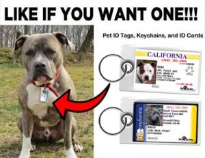 Pitbull Pet ID Tag