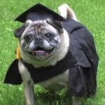 Dog Earns MBA—But Can He Deduct It On His Taxes?