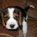 """Is your dog """"typical"""" for their breed……?"""