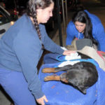 Dog thrown from car in NYC has died