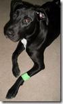 injured-pet (2)