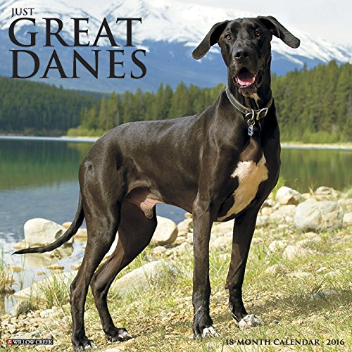 Great Dane Video: Best Of Funny Great Dane Compilation