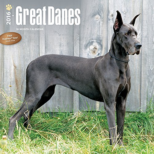 Giant Great Dane vying for world record