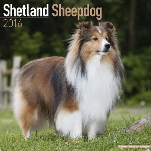 Shetland Sheepdog howls along to iconic EastEnders theme song in perfect tune... and even pauses for the breaks