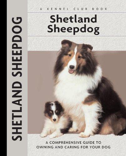 Shetland Sheepdogs Love Their Playtime
