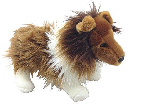 Shetland Sheepdog Video: Cookie, the Shetland Sheepdog