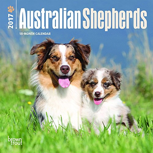 Australian Shepherd - Dog Breeds - Everything You Need To Know
